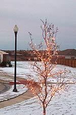 Taken Dec. 23, 2004 in far north Fort Worth, Texas. Click for larger image