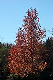 Taken Nov. 25, 2004 in Keller, Texas. Click for larger image
